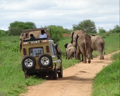 Safari personalizado Tanzania