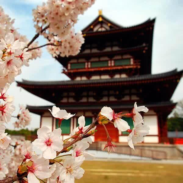 15 días en Japón