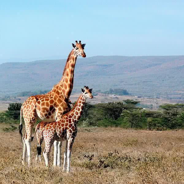 Luna de Miel en Kenia