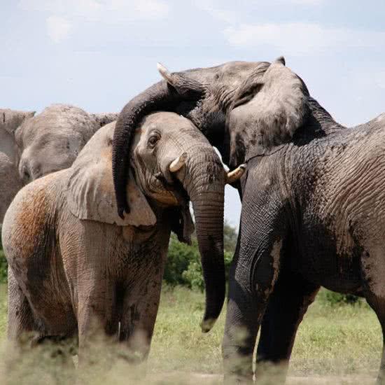 Safari privado en Kenia