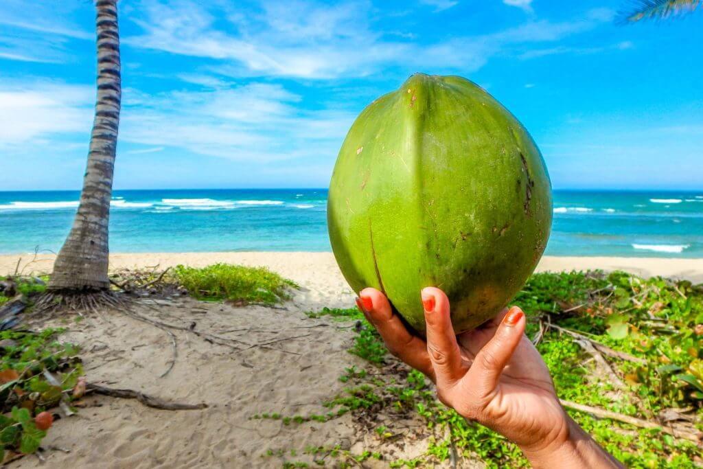 The Coco de Mer