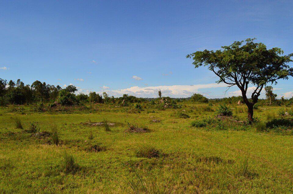 paisajes verdes Africa