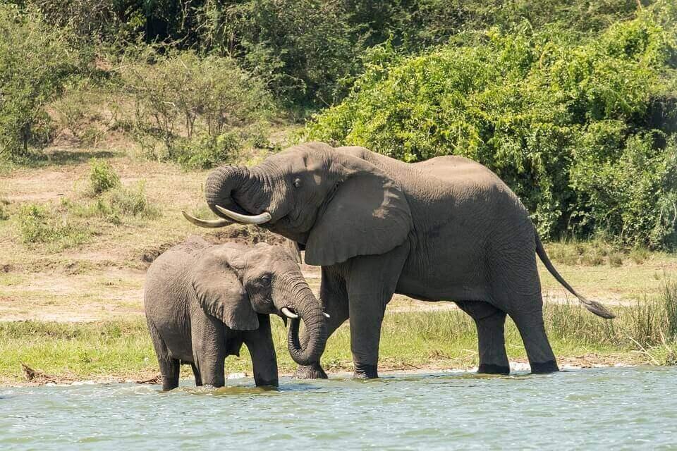 Naturaleza y fauna en Uganda
