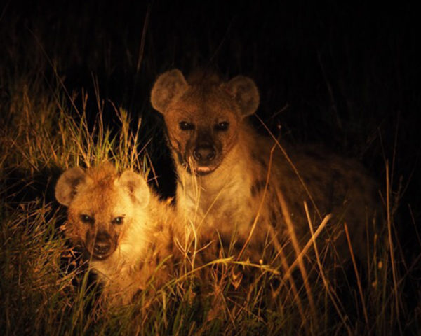 safari nocturno en 4x4