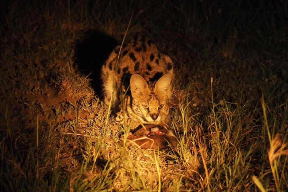 safari nocturno en coche electrico