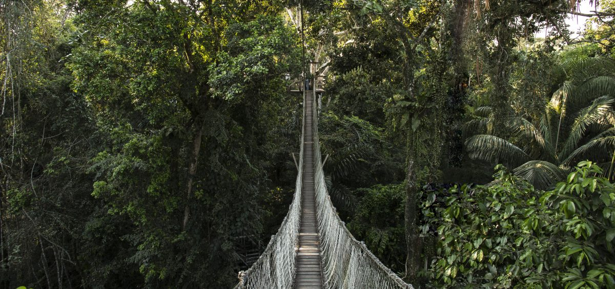 selva amazonica peru