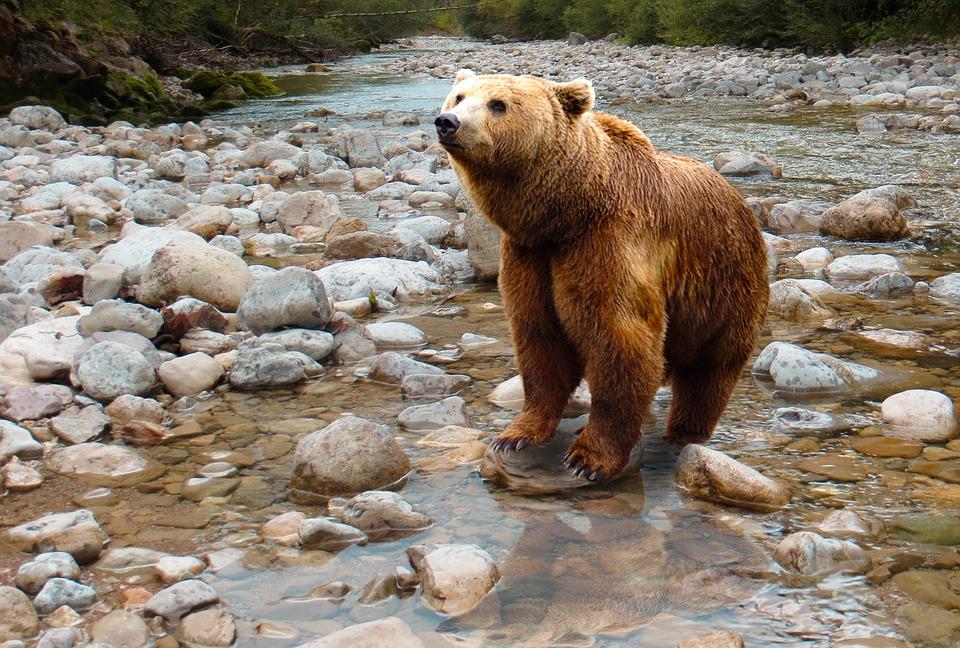 River Bear Safari