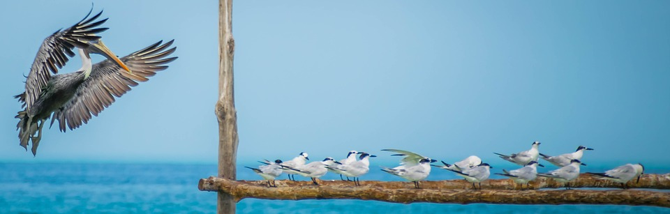 isla de holbox mejico
