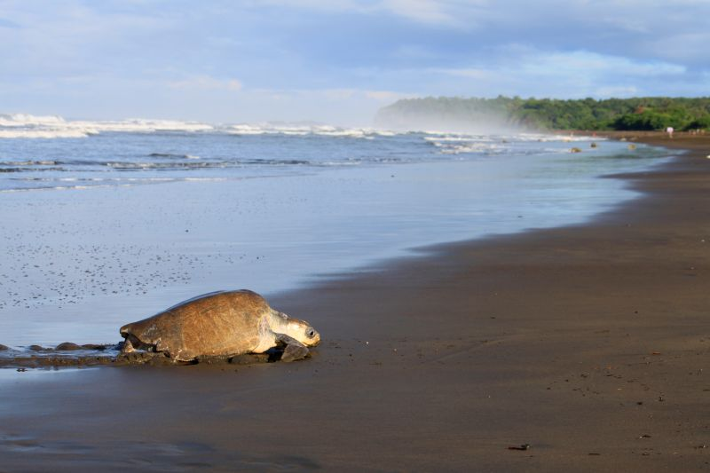 Tortugas en costa Rica
