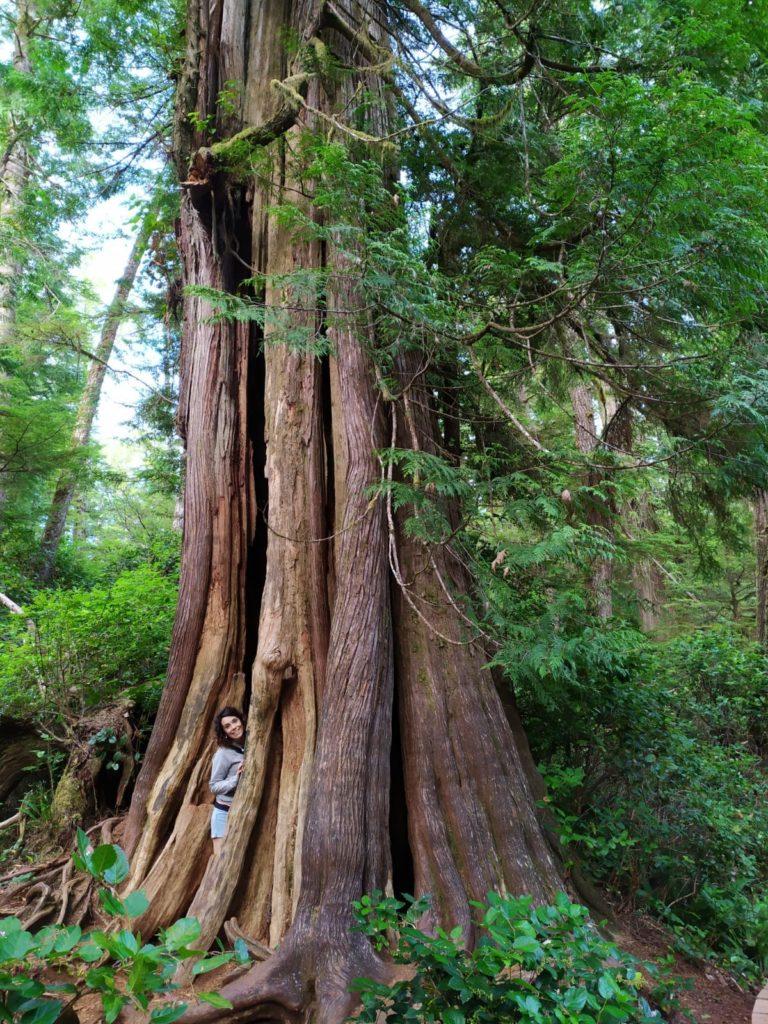 Rainforest Trail Tofino