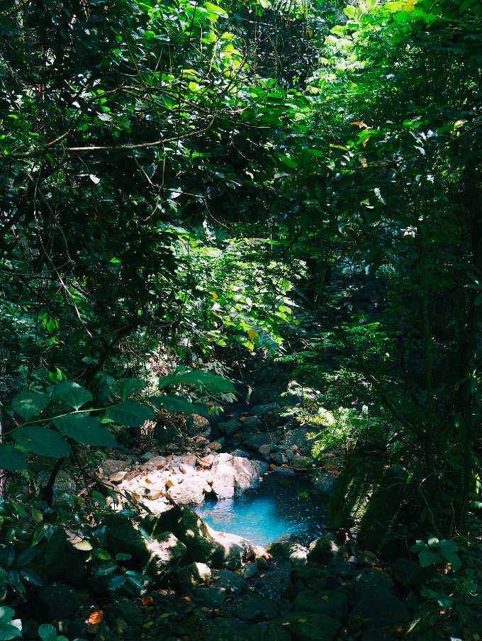 Paraiso en la selva