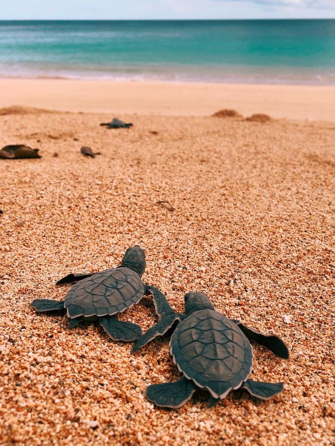 Tortugas en playa Santo Tomé y Príncipe